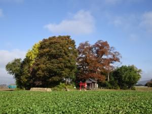 馬場家祝殿遠景。手前の前田ではお菜が順調に育っています