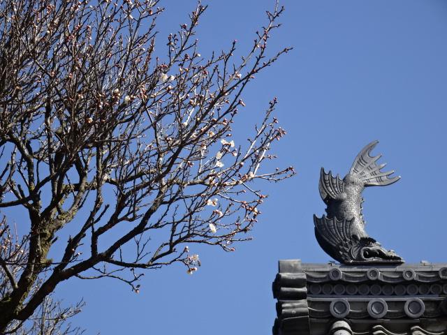 表門のシャチホコの梅の花