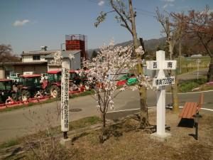 内田地区地域づくりセンターのカタオカザクラ。丈は低くても花を咲かせています