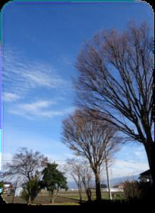冬の木立1