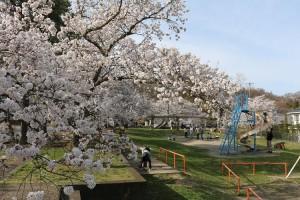松本藩主から領民に解放されたのが始まりの 城山公園。 200年近く経っても市民が集う憩いの場です。