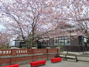八重桜と旧裁判所