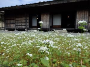 そばの花と工女宿宝来屋