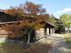 工女宿宝来屋の横にも紅葉があります