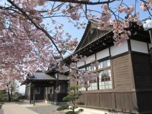 八重桜と旧松本区裁判所庁舎