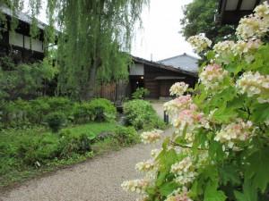 夏:工女宿宝来屋とカシワバアジサイ