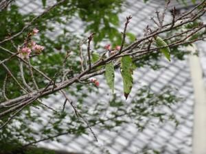 9月20日撮影 ポツポツと花が見えます