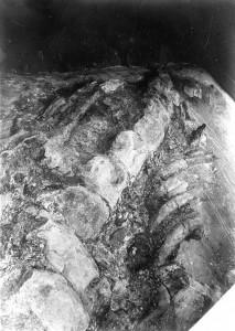 穴沢クジラ化石 サイズ小