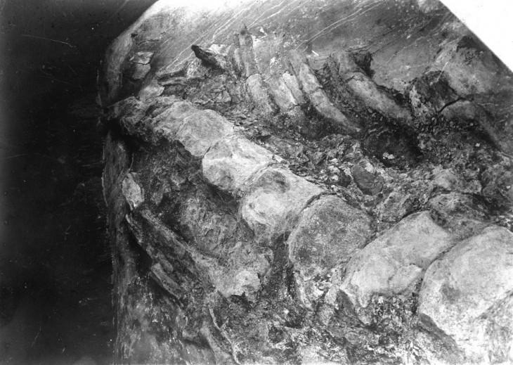 穴沢のクジラ化石