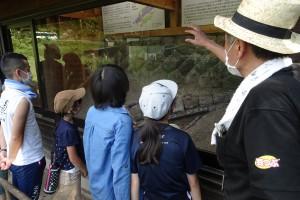 現地保存クジラ化石の見学