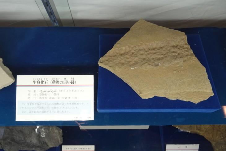 生痕化石(動物が海岸を歩いた跡)