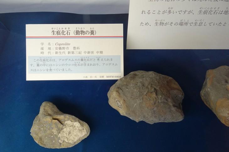 生痕化石(動物のフン)