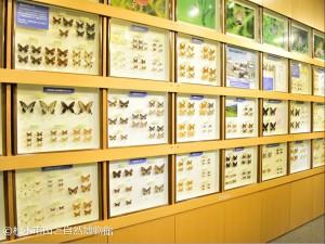 2階展示室昆虫